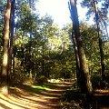 Jesien w lesie. #jesien #las #Mazury