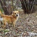 dzisiaj z Puszkiem szukałam wiosny ... #przedwiośnie #Puszek #pies #wieś #Chomiąża