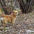 dzisiaj z Puszkiem szukałam wiosny ... #przedwiośnie #Puszek #pies #Chomiąża #wieś