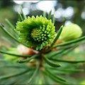 wiosna... #wiosna #drzewa #rosliny