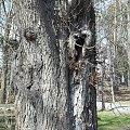 #drzewa #Nałęczów #ParkZdrojowy