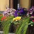 S. Miasto #StareMiasto #Warszawa #kwiaty