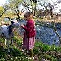 Dominika już bardzo tęskniła za kozuchą; już nie mogła się doczekać kiedy sąsiad wyprowadzi kozę na trawę :)) #Chomiąża #Czechy #Dominika #koza #RzekaOpava #wieś #wiosna
