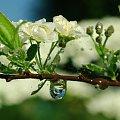 Wiosennie #krople #makro #ogród #wiosna