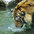 #zoo #zwierzęta