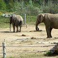 Zoo Poznań #zoo #zwierzęta