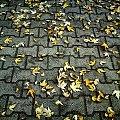jesień w stanie już opadłym #jesień #liść #liście #chodnik