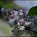 #wiosna #maj #bez #bzy #drzewo