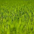 Green... #arietiss #flora #natura #wiosna