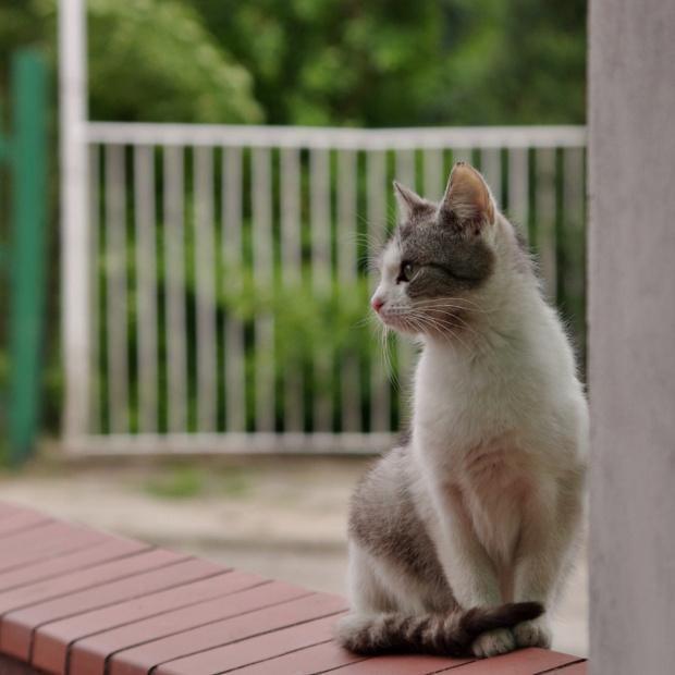 To też w temacie FotoPojedynków: zwierzaki słodziaki... :) #kot #zwierzęta