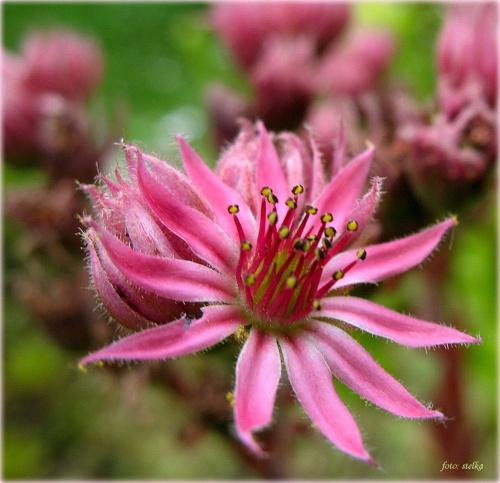 dla Harmonikah ... #kwiaty #wiosna #życzenia