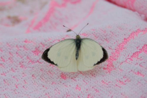 Motyl na plaży #Bałtyk #Chłopy #MorzeBałtyckie #Pomorze
