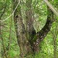#kapliczki #las #modraki #PaprocieLeśne #pole #rzeczka #staw #wieś