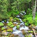 Potok w Dolinie Kościeliskiej #góry #krajobrazy #przyroda #widoki