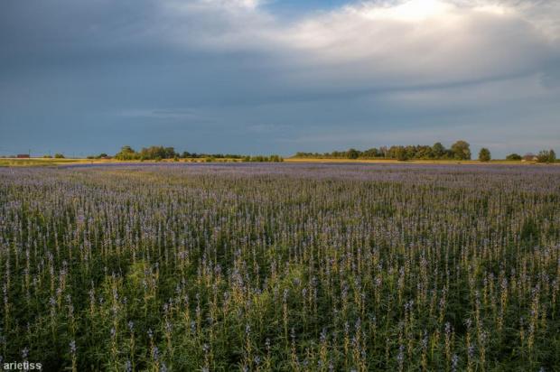 Po drodze... #arietiss #HDR #krajobraz #pole #Polska #wieś