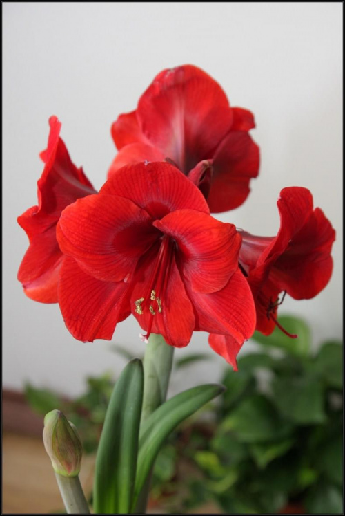 kwiatek taki byle jaki #Kwiaty