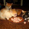 ... :) #Chomiąża #kocięta #koty #NaWsi #zwierzęta