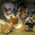 kociaczki do wzięcia ... :) **** ulub. amyw **** #Chomiąża #kocięta #koty #NaWsi #zwierzęta