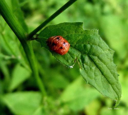 takie tam ... paskudztwa ... #larwy #lato #NaWsi #owady #stonka