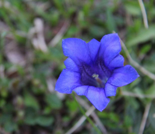 niebiesko mi;)) #kwiaty