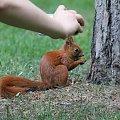 blisko coraz bliżej #wiewiórka