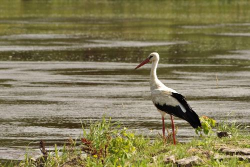 #ptaki #bociany #rzeka #Odra