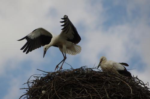 #bociany #gniazdo #ptaki