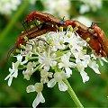 stworzonka małe ... :)) #owady #przyroda #żuczki