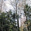 Lądowanie na brzozie-3 #ModelLatający #brzoza #drzewo