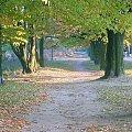 Jesienna droga. #droga #jesień