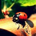 #ZachódSłońca #chmury #biedronka #natura #zwierzęta #makro #owady