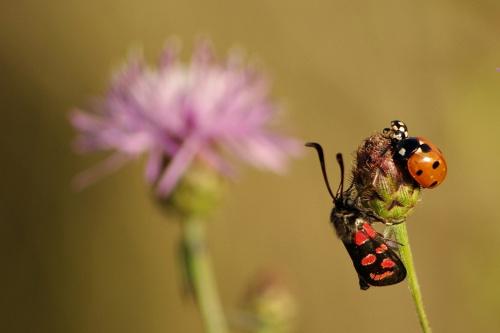 wieloróżnokropki #łąka #natura #owady