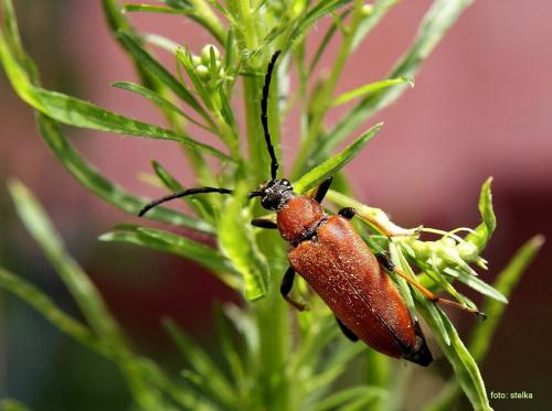 ... #kwiaty #lato #ogród #owady #chrząszcze
