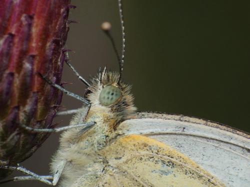 Motyl #makro #zwierzęta