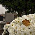 #cmentarz #nagrobek #WszystkichŚwiętych