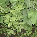 dziwaczek #rośliny #sadzonki