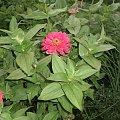 cynia #rośliny #sadzonki