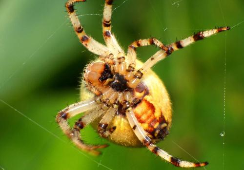 *** #makro #zwierzęta #pająk