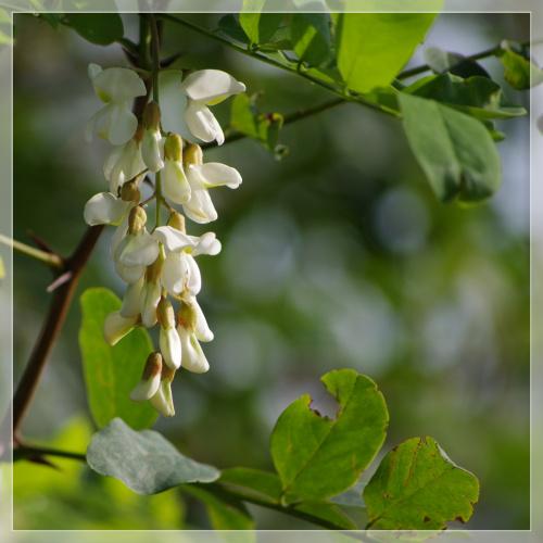 to nie wiosna- z 23 sierpnia :) #natura #przyroda