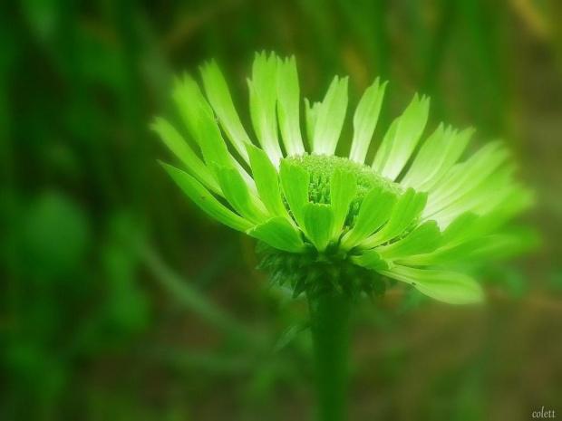 #kwiaty #lato #ogród