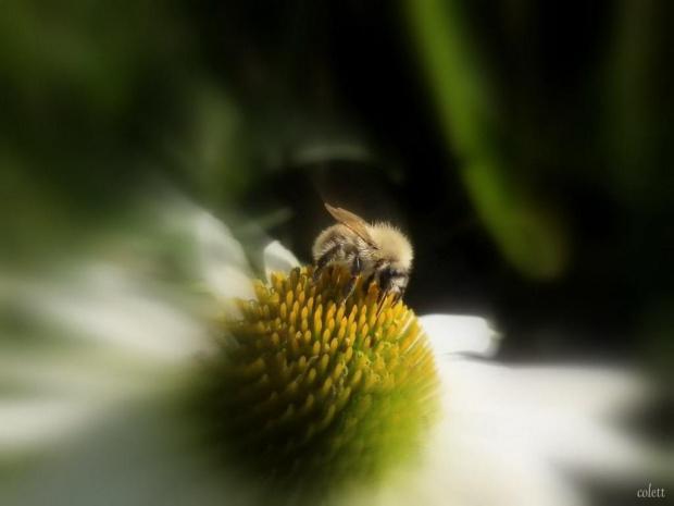 #kwiatry #makro #owady #wrzesień