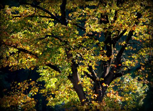 jesień w Krakowie, chyba lipa :)