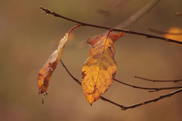 #jesień #liście #listopad