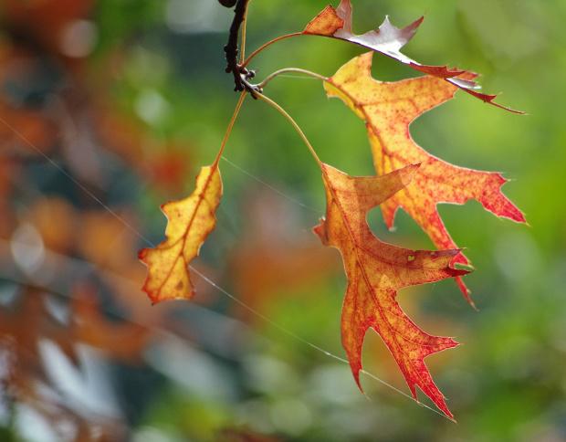 ... #jesień