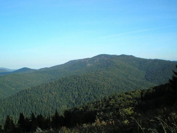 Kudłoń z Turbaczyka #góry #beskidy #gorce #turbacz #HalaDługa #HalaTurbacz #CzołoTurbacza #turbaczyk