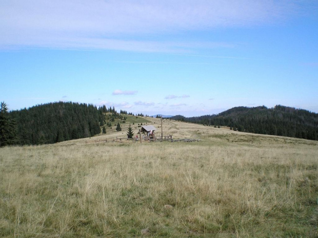 Hala Turbacz #góry #beskidy #gorce #turbacz #HalaDługa #HalaTurbacz #CzołoTurbacza #turbaczyk