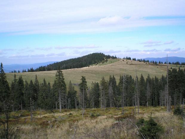 Hala Turbacz i Czoło Turbacza spod Turbacza #góry #beskidy #gorce #turbacz #HalaDługa #HalaTurbacz #CzołoTurbacza #turbaczyk