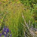 Ogród w Radkowie #byliny #grochowscy #ogród #radków