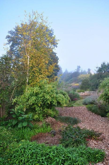 Ogród w Radkowie #grochowscy #ogród #radków #szkółka