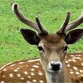zwierzaczki ... :) **** ulub. inka47 **** #zoo #zwierzęta